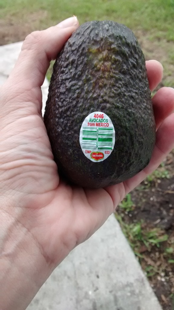 Choosing the Perfect Avocado for Your DIY Taco Bar + $10 PayPal Giveaway | #PublixFiesta #ad | Mommy Runs It